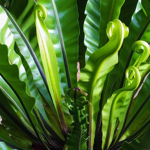 Going on Vacation? Make Your Own Plant Nanny, Plus More Great Reader Tips