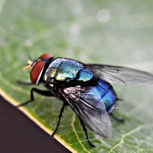 7 Ways to Get Rid of Flies in the House
