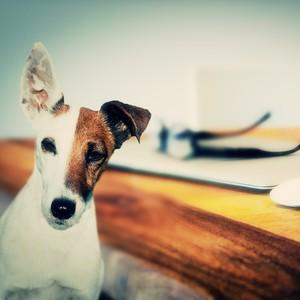 Becoming the Boss' Pet