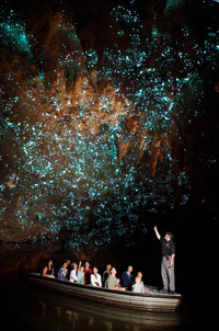A guide points out the glowworms at Waitomo Glowworm Caves in New Zealand. Photo courtesy of Waitomo Glowworm Caves.