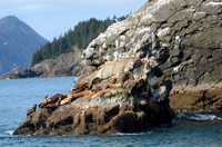 Steller sea lions relax at Kenai National Park and Preserve in Alaska. Photo courtesy of Donna Barnett.