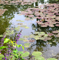 At Giverny in Normandy, France, Monet's water lilies were his favorite subjects for painting. Photo courtesy of Patricia Woeber.