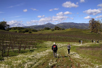 A guided hike across Jordan Vineyard in Healdsburg, California, combines beautiful views, moderate exercise and a memorable wine-tasting. Photo courtesy of Norma Meyer.