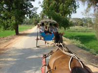The modes of travel in Myanmar include oxcarts and horse-and-buggy rides. Photo courtesy of Sandra Scott.