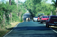 Horses share the road with automobiles in Vieques, Puerto Rico. Photo courtesy of Victor Block.