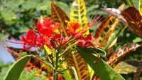Amaitlan botanical garden on Stone Island near Mazatlan, Sinaloa, Mexico, is abloom in five different botanical environments. Photo courtesy of Stuart Wasserman.