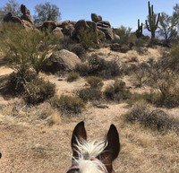 The view from atop a horse is outstanding as riders move through Arizona's Sonoran Desert. Photo courtesy of Diamond Buckle Adventures.