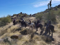 A group of horseback-riders travel through Arizona's Sonoran Desert. Photo courtesy of Diamond Buckle Adventures. Photo courtesy of Carol Waller.