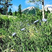 The view from the Sundance Mountain Resort includes Utah's Mount Timpanogos. Photo courtesy of David Latt.