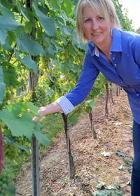 Augusta Raimes of Raimes Family Vineyard in Hampshire, England, checks a vine in the chardonnay paddock. Photo courtesy of Athena Lucero.