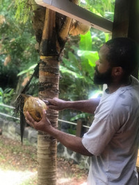 A worker at the Eden Wellness Farm in Grenada opens a coconut for guests to try. Photo courtesy of Nicola Bridges.
