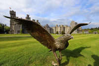Ashford Castle in County Mayo, Ireland, is the home of the Ireland School of Falconry. Photo courtesy of Philip Courter.
