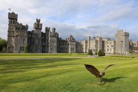 Spending a few nights at Ashford Castle in Cong, County Mayo, Ireland, brings with it being pampered in every possible way. Photo courtesy of Philip Courter.
