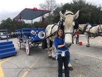 Charlotte, a native of Beaufort , South Carolina, and her horse, Max, take visitors for carriage rides through the town. Photo courtesy of Bill Neely.