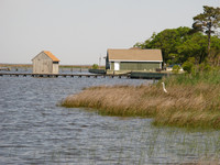A heron is poised in the reeds at False Cape State Park in Virginia. Photo courtesy of Candyce H. Stapen.