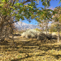 Paths around the Manzanar War Relocation Center in Inyo County, California, provide peaceful places for walks and recollections. Photo courtesy of Kitty Morse.