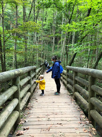 The Jefferson National Forest's Cascades National Recreation Trail offers an excellent place for a walk in the woods near Pembroke, Virginia. Photo courtesy of Candyce H. Stapen.