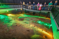 The Hagood Creek Petroglyph Site in South Carolina offers a light show to describe the markings and tell the story of their discovery. Photo courtesy of Discover South Carolina.