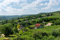 The Szekszard vineyard in southern Hungary is one that is putting Hungarian winemaking back on the map. Photo courtesy of Taste Hungary.