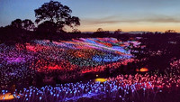 'Field of Light at Sensorio' by artist Bruce Monro is currently lighting up the hills of Paso Robles, California. Photo courtesy of Jim Farber.
