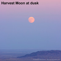 View the Harvest Moon this week.