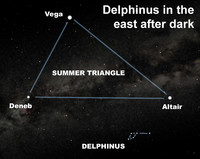 View the stellar dolphin after dark this week.