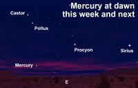 Find Mercury at dawn this week.