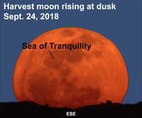 See the harvest moon after dark this week.