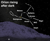 See the great celestial hunter after dark this week.
