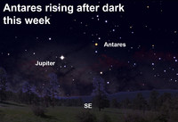 See the star Antares rise after dark this week.