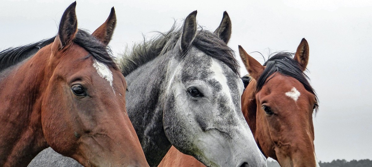Stalking Horses